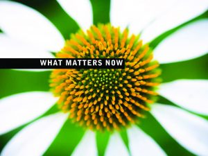 thumbnail of What_matters_now_Seth_Godin